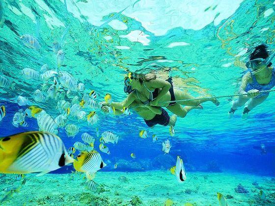 Snorkelling off Key Largo