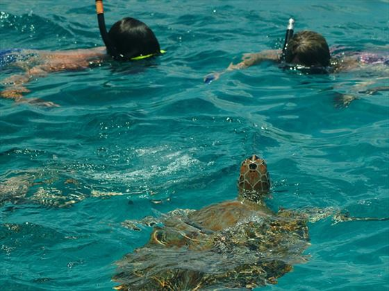 Snorkelling with Turtles at Bougainvillea Beach Resort