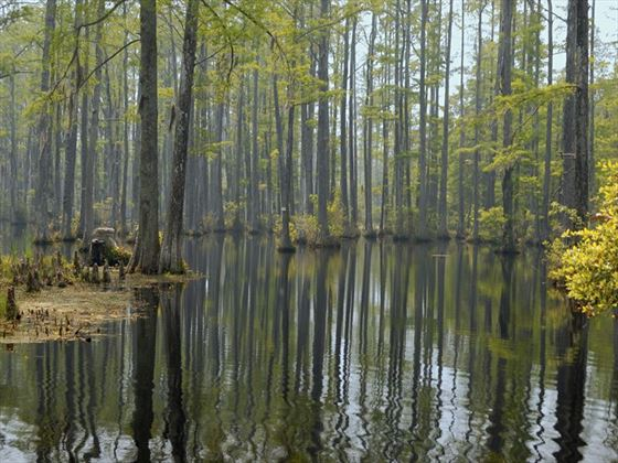 South Carolina wetlands