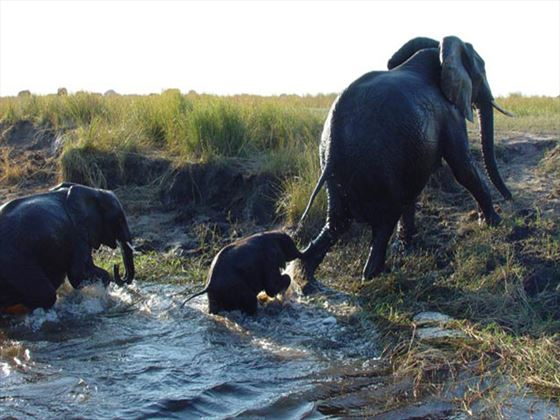 Surrounding wildlife at Chobe Safari Lodge
