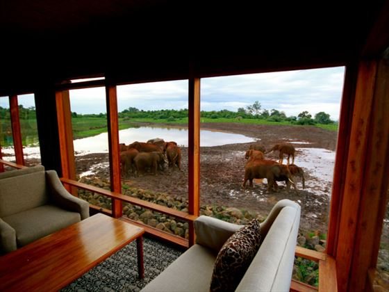 The Ark game viewing room