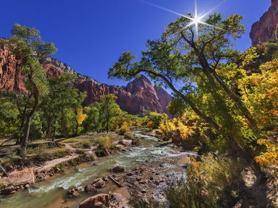 The Virgin River in Zion National Park in autumn