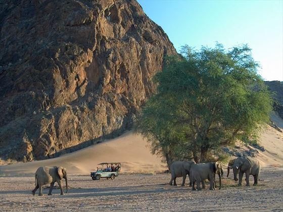 Wilderness safari in Damaraland