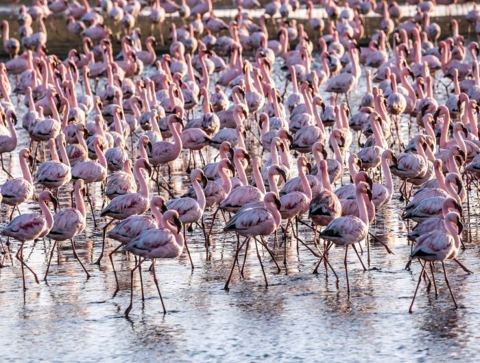 Flamingo in Namibia - getty