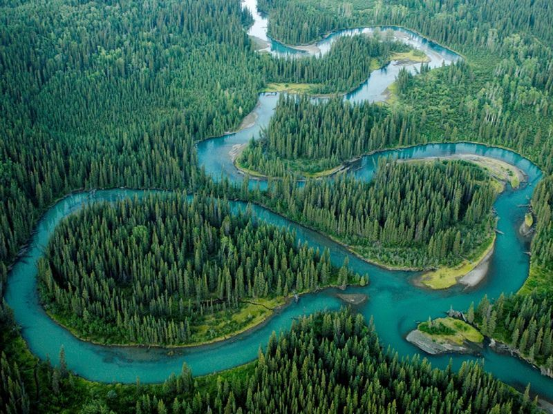 aerial view of the iskut river winding through the forest