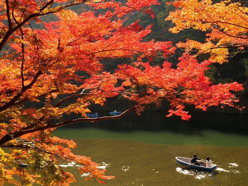 autumn colours katsura river kyoto