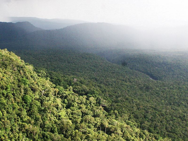cardamom mountains cambodia