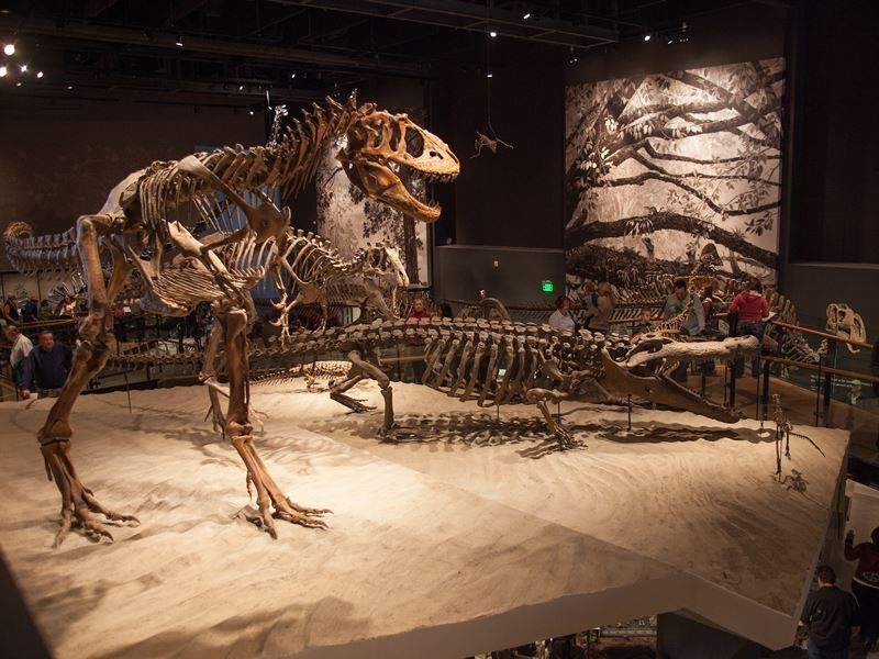 dinosaur exhibit at natural history museum of utah