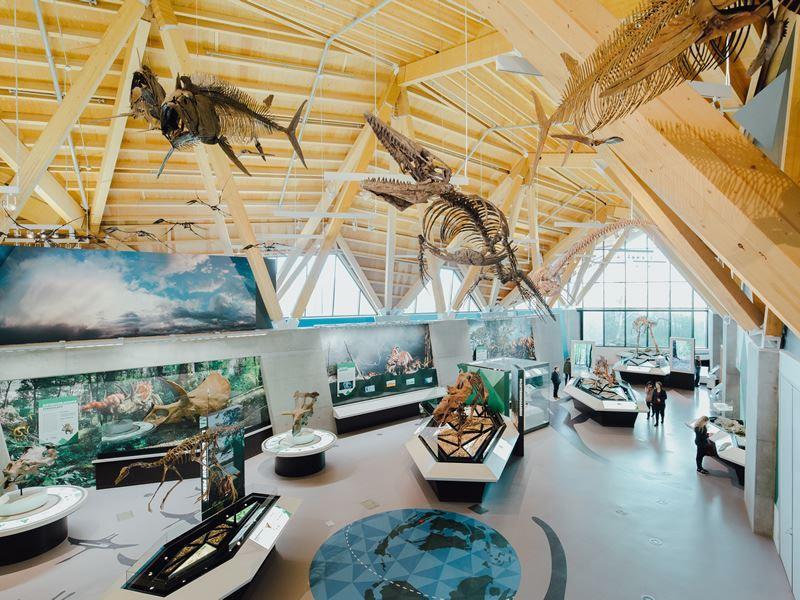 dinosaur fossils on display inside the philip j currie dinosaur museum