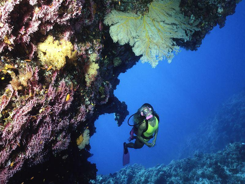 diver exploring coral cave australia gi 157294732 resized 800x600