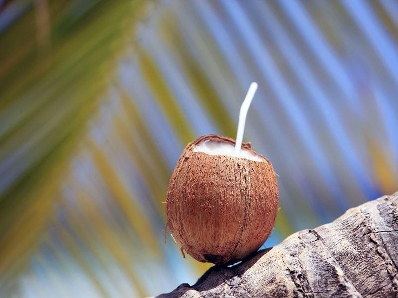 Coconut in Barbados