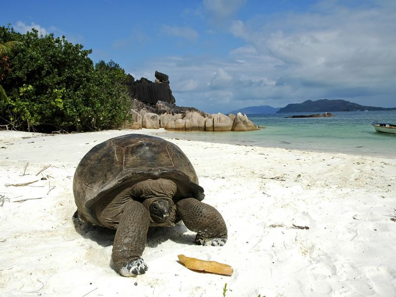 giant tortoise on praslin island
