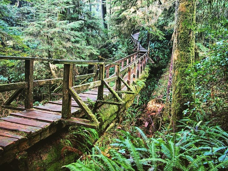 hiking trail in pacific rim national park