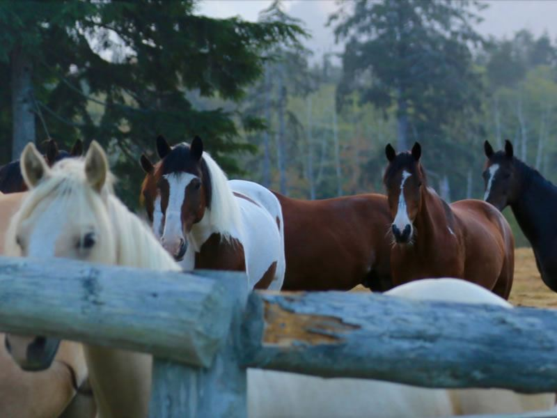 horses at clayoquot wilderness resort