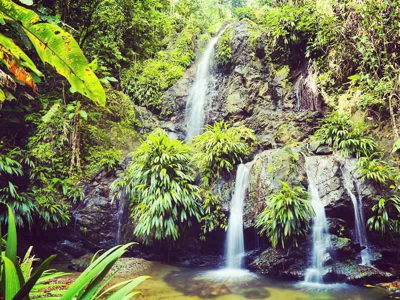 Lush rainforest and falls of Tobago
