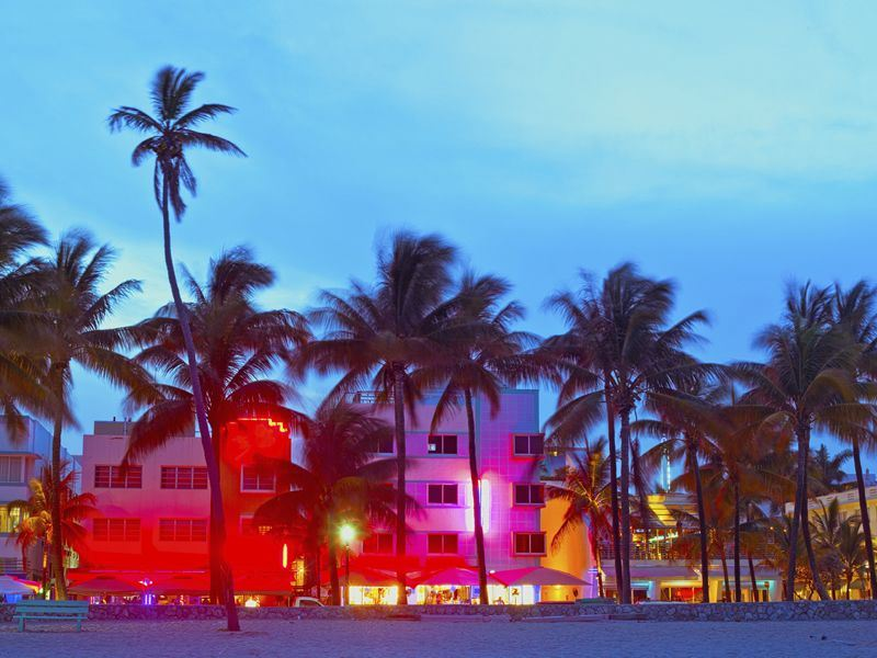 Miami Hotels and Palms at Night