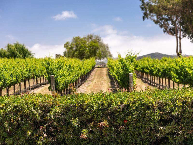 paso robles central california wine country
