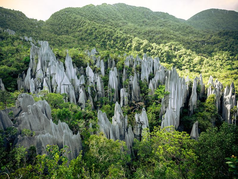 pinnacles rock formation gunung mulu national park malaysia