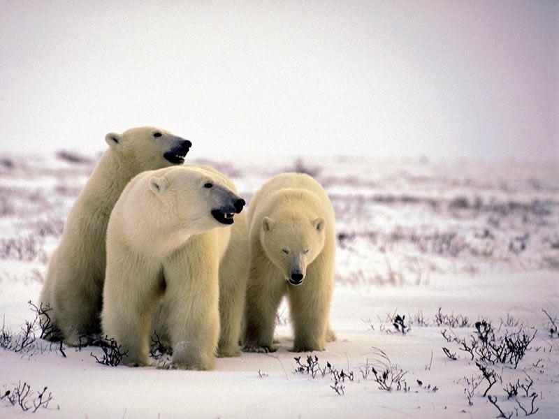 polar bear provincial park ontario