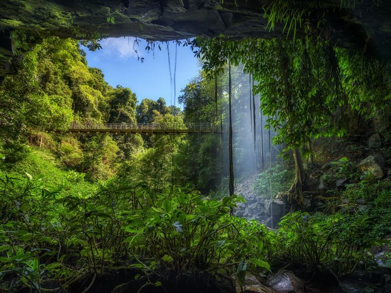Rainforest of Dorrigo National Park, NSW