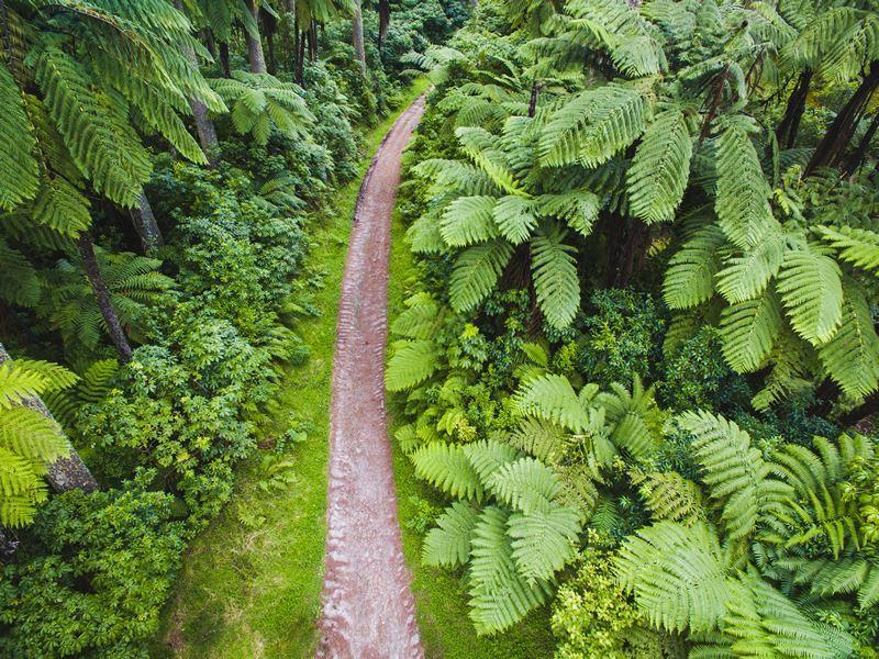rotorua forest walk