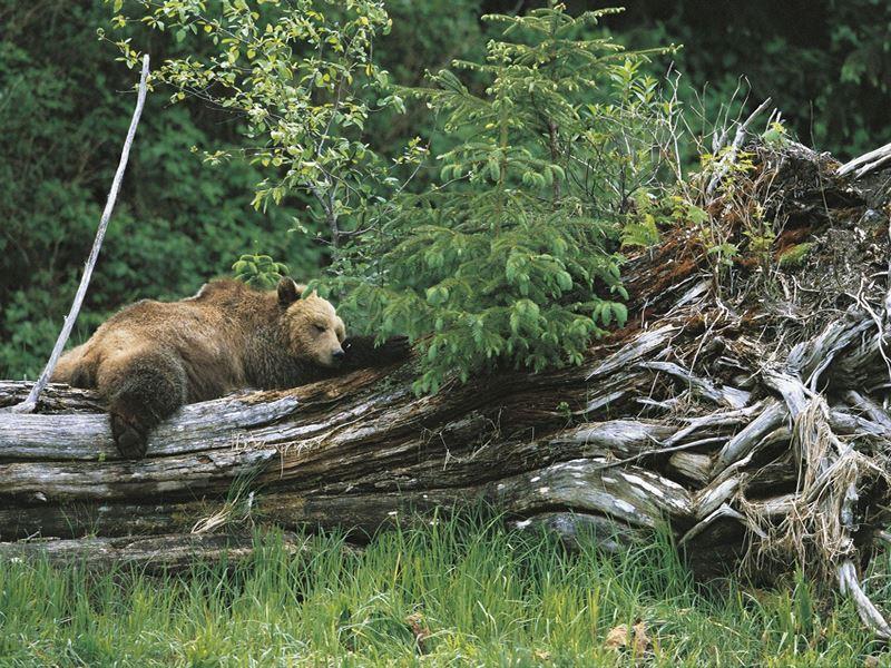 sleeping bear knight inlet lodge