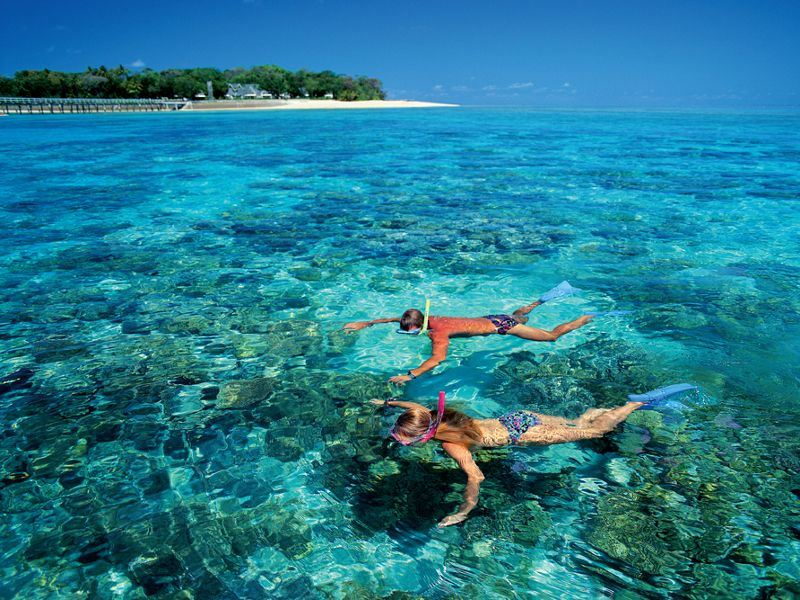 snorkellers at green island   tourism images