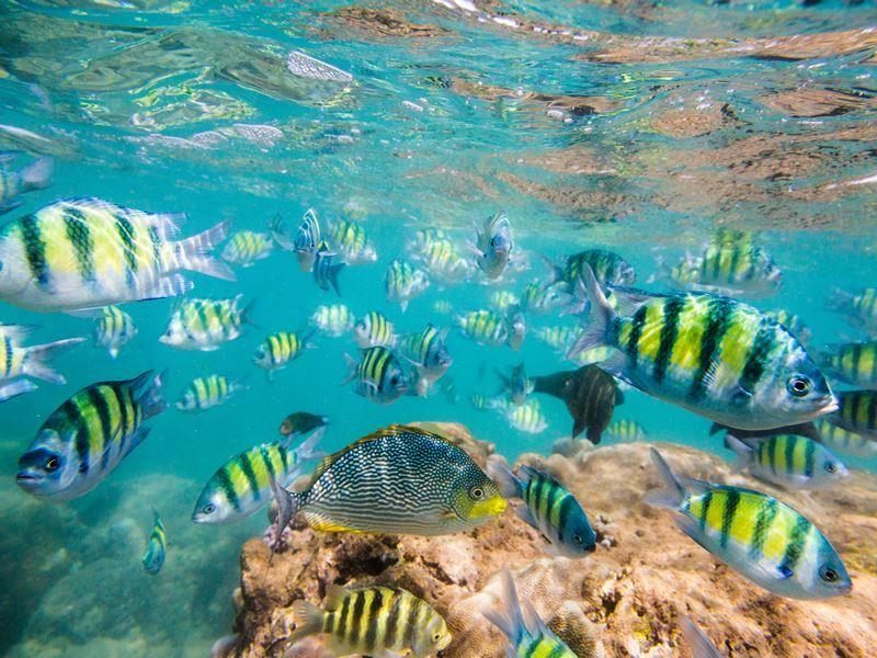 snorkelling sri lanka hikkaduwa reef