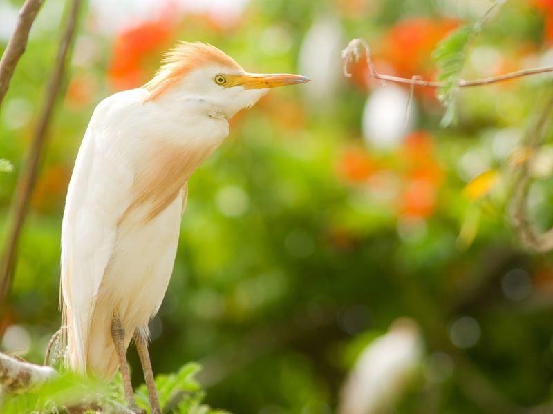 st lucian heron
