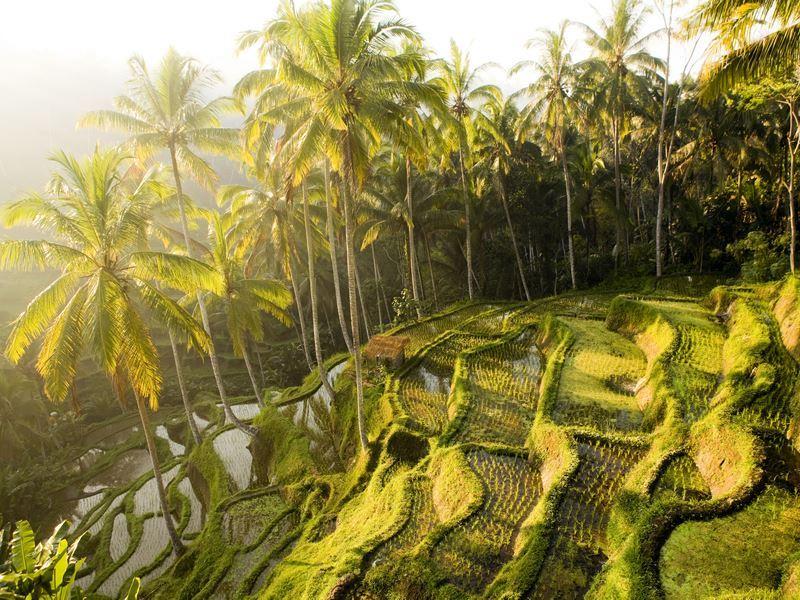 tegallalang bali rice terraces