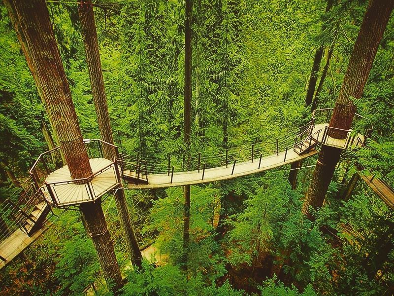 treetops adventure at capilano suspension bridge park