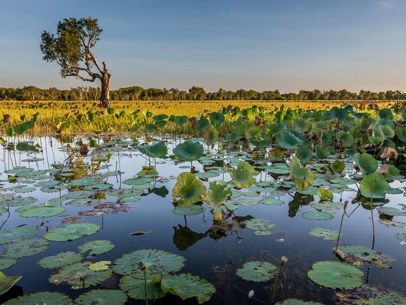 wetlands around kakadu