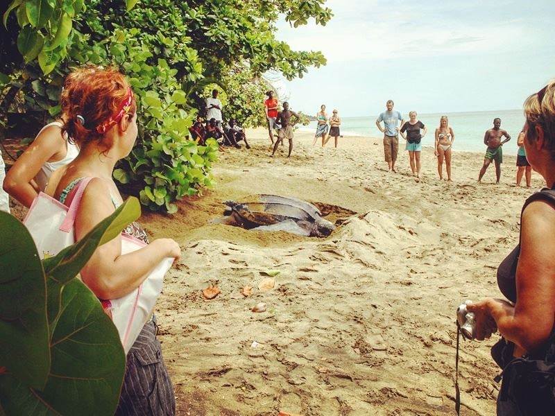 witnessing a turtle nesting