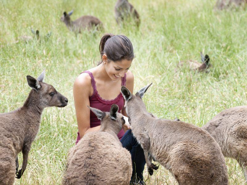 woman feeds kangaroos on kangaroo island