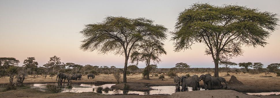 Elephants around a waterhole at Chobe National Park , Botswana
