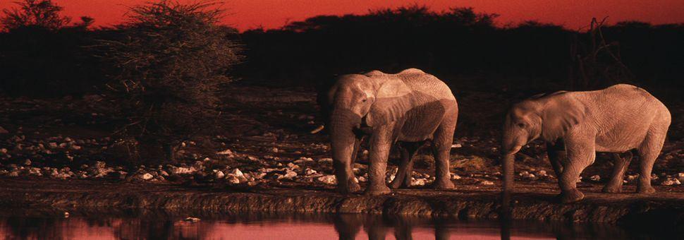 Elephants at sunset, Etosha National Park
