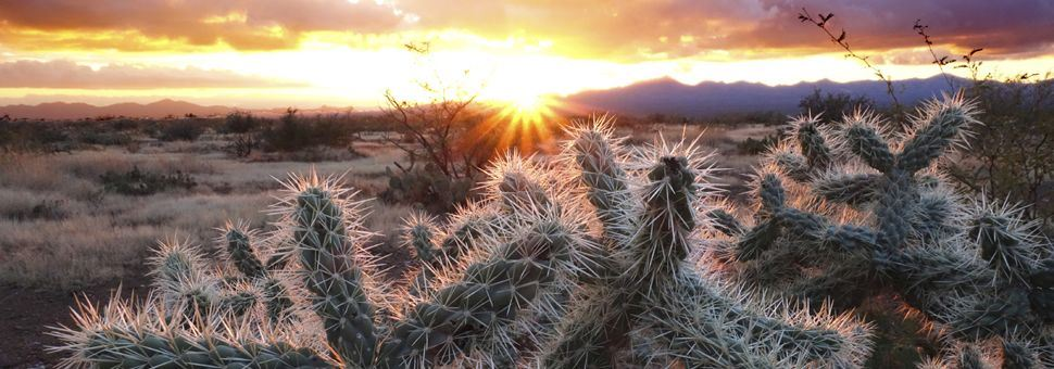 Sonoran Desert sunset, Arizona